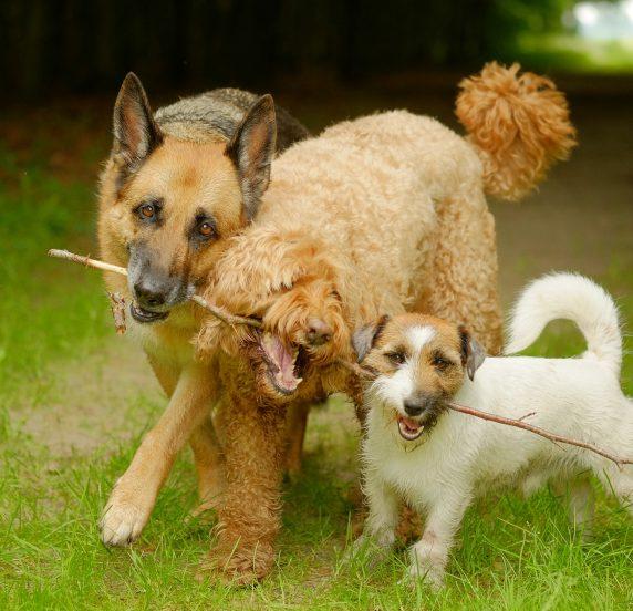 Foto honden met stok